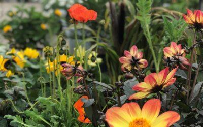 Hildurs Gröna – blommor till din trädgård och växter till hela ditt hem